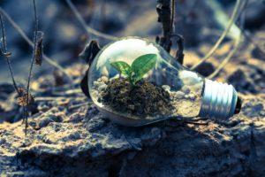 Plante qui pousse à l'intérieur d'une ampoule